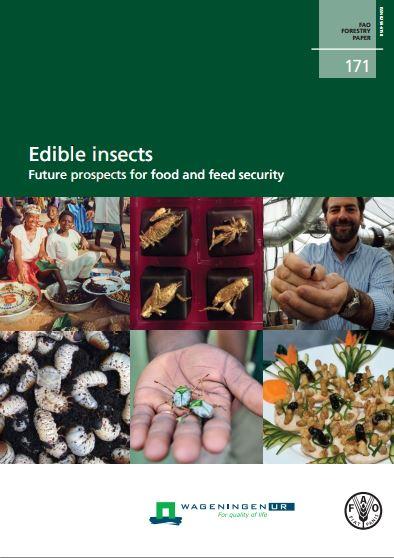 Insekten sind eine Lösung für die kommenden Herausforderungen der Zukunft.