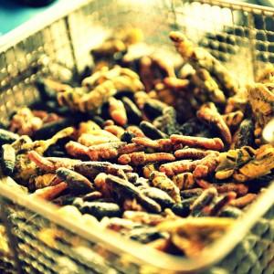frische Insekten